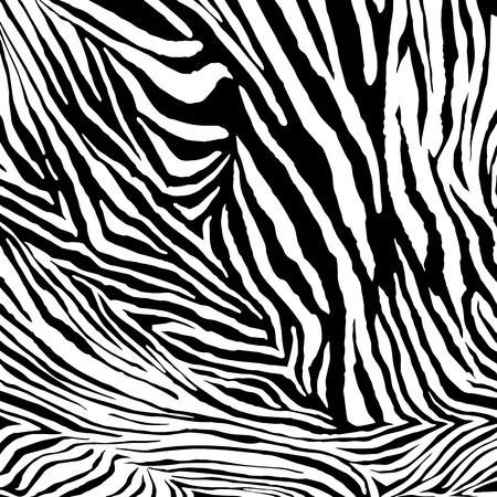 zebra skin: Zebra texture