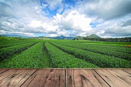 cameron: wood floor on tea plantation