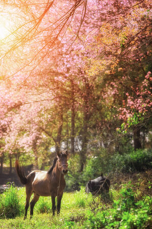 horse show: horse in pink Cherry blossom