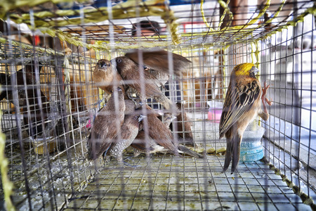 incarcerate: bird in cage