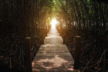 lightsome: The forest mangrove at Chanthaburi, Thailand Stock Photo