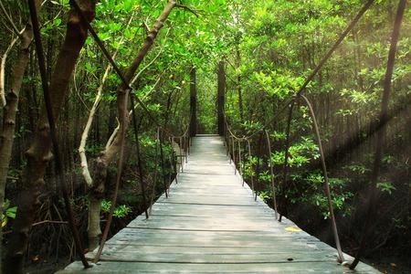 Suspension bridge in the forest Archivio Fotografico