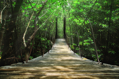 Suspension bridge in the forest Standard-Bild