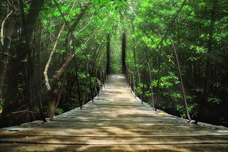 Suspension bridge in the forest 免版税图像