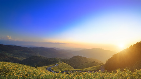 viewpoints: Mexican Sunflower Weed on the mountain,Mae Hong Son Province,Thailand. Stock Photo
