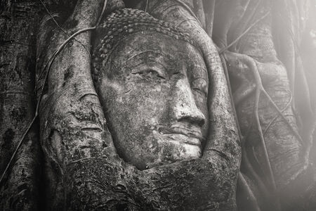 Head of Sandstone Buddha in The Tree Roots at Mahathat Temple, Ayutthaya Thailand photo