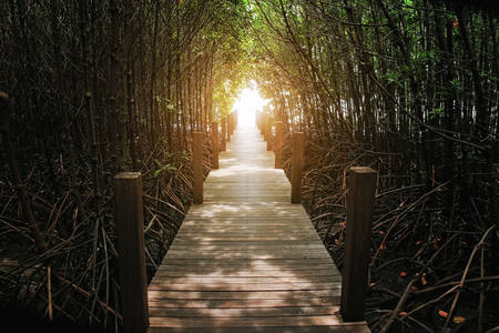 unwanted flora: The forest mangrove at Chanthaburi, Thailand Stock Photo