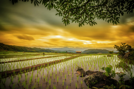 terraced field: Terraced paddy field in Mae Chaem village Chaing mai Thailand