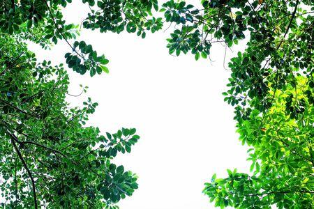 frame border: Green leaf frame border isolated on white background Stock Photo