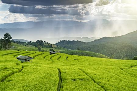 Pa Bong Piang-padieveldgebied in Chiang-MAI Thailand Stockfoto