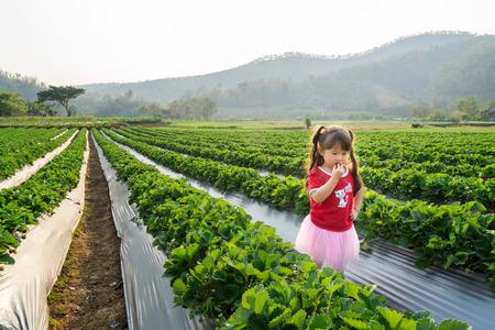 Little asian girl eating strawberry