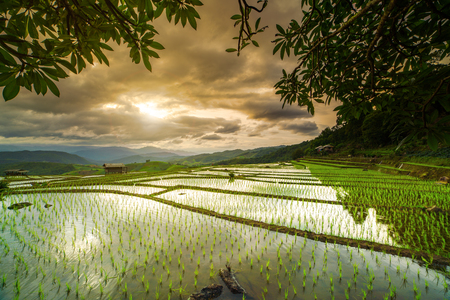 terraced: cottages on rice field in pa bong piang chiang mai thailand