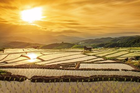 huisjes op rijstveld in pa bong Piang Chiang Mai Thailand bij zonsondergang Stockfoto