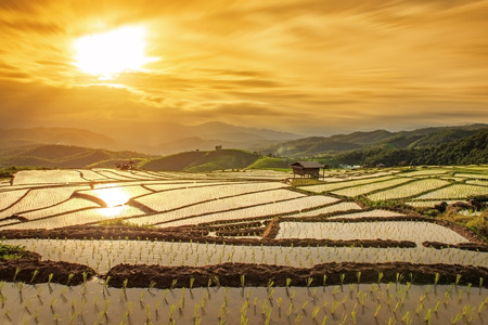 cottages on rice field in pa bong piang chiang mai thailand at sunset 스톡 콘텐츠