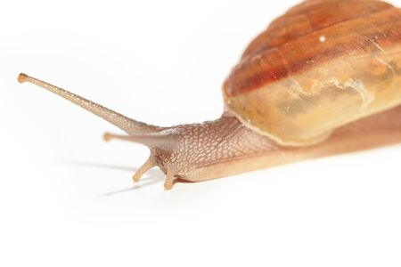 slither: Snail on white background