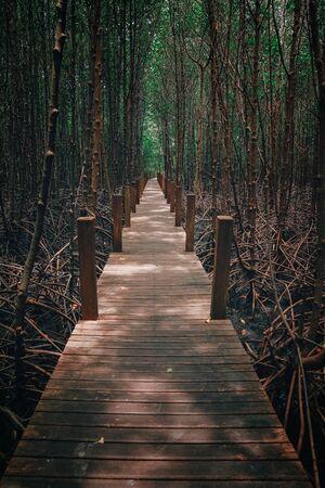 The bridge in to the Mangrove forest Standard-Bild