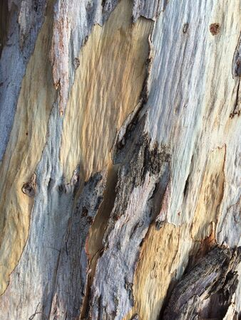 surface: Wood Stock Photo