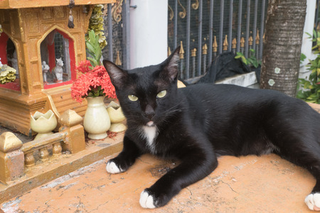 lay down: black cat lay down on Shrine