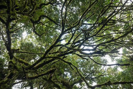 plentiful: Tree and leaf plentiful in forest Stock Photo