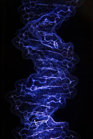 nucleotides: Un modelo 3D de la estructura cristalina de ADN