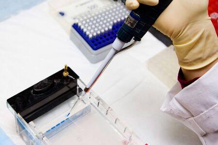 electrophoresis: Scientist loading a Agarose gel for electrophoresis