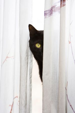 Black cat with bright green eyes peeks with one eye, around a white curtain