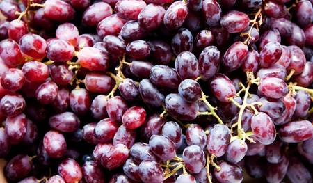 concord grape: Healthy red Yaquti grapes on stems, great for wine