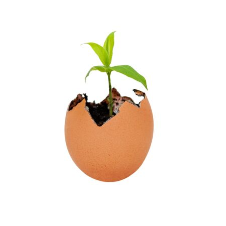 Brown eggshell cracked open with Earth dirt sand and sprouting green plant growing metaphor for new life and environment, isolated. Stock Photo