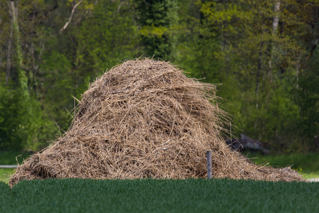 look for: look for a needle in a haystack Stock Photo
