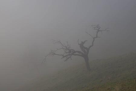 lonesome: Lonesome tree Stock Photo