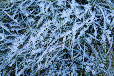 ice crystals: Natural frozen grass with ice crystals