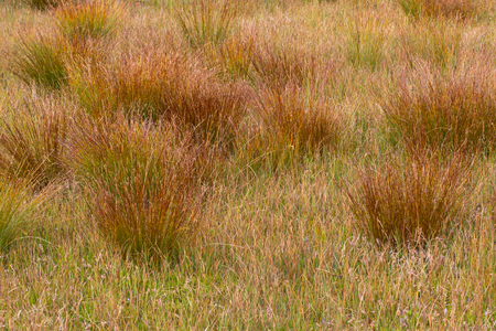 moor: Natural grass in a hill moor