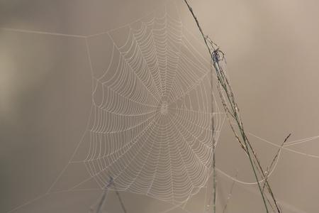 macro natural cobweb in morning light Imagens