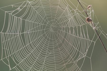 macro natuurlijk spinneweb in ochtendlicht