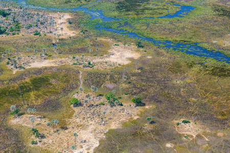 aerial view natural Okavango Delta swamp, grassland, trees, pathways