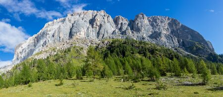 southern wall of Marmolada mountain in italian Dolomites, green trees and meadow