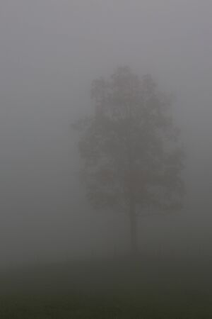 one lonesome natural tree standing in dense fog