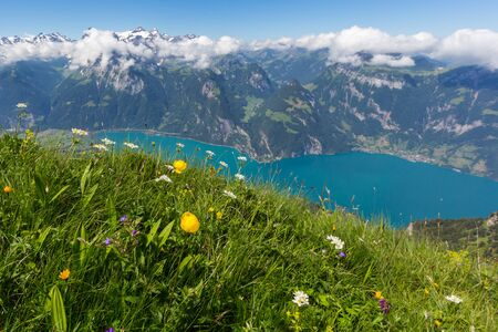blooming flowers above lake Uri with mountain summits and blue sky