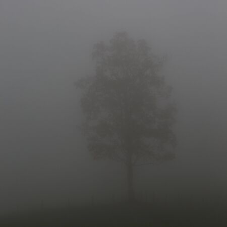 one lonesome natural tree in mist and fog
