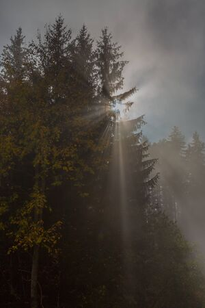 rays of light shining through tree with mist
