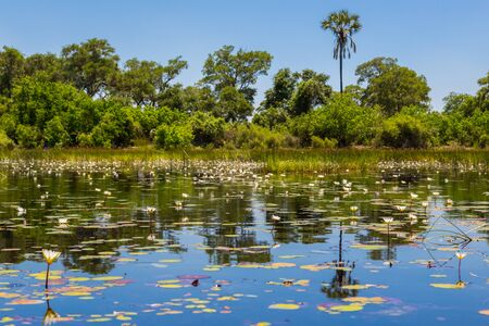 natural river of Okavango with green vegetation, trees and water lily Stock fotó