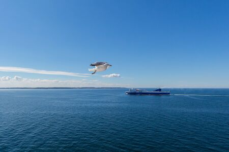 one natural seagull in flight with ship, blue cloudy sky and sea