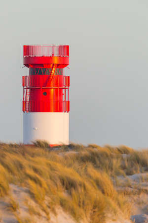 red white lighthouse on Helgoland Duene island in evening sun, golden grassland