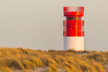 red white lighthouse on Helgoland Duene island in evening sunlight, grassland