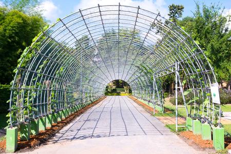 entrance arbor: Metal pergola in park ( Metal arbor )