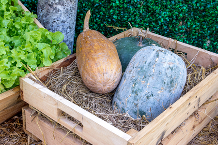 ash gourd: Green and brown winter melon in a wooden box with vegetables still life background