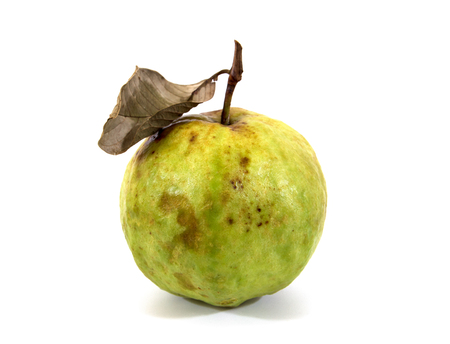 Rotten guava fruit with dry leaf isolated on white background.Rotten guava isolated Stock Photo