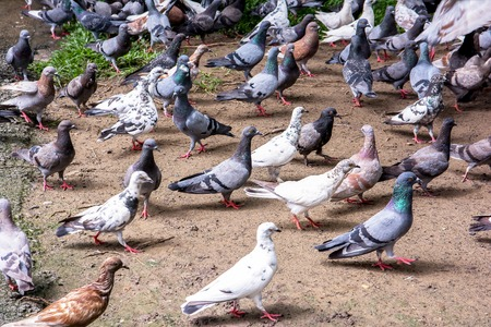 pigeons in the park background