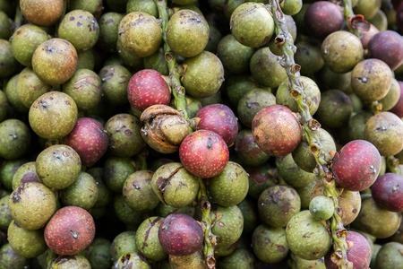 Closeup of Betel nut on tree background