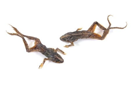 Dried toads isolated on white background.Dried small green frog isolated Stock Photo